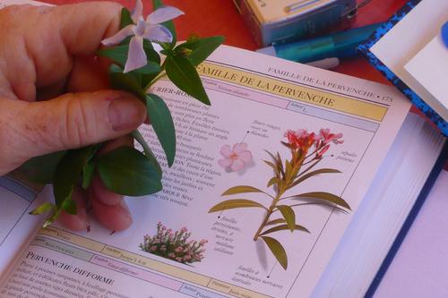 Atelier La botanique en douceur