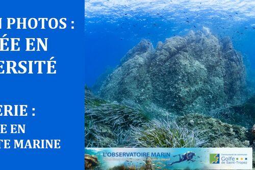 Voyage en biodiversité marine