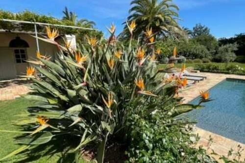 Flo Garden