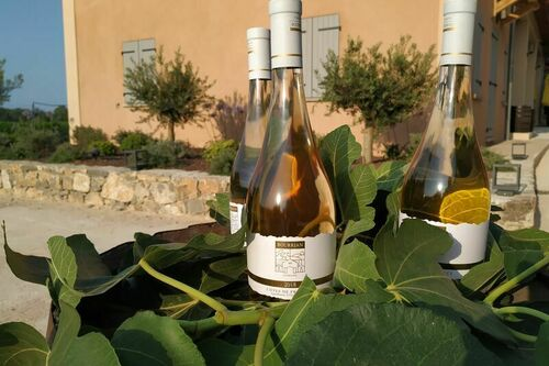 Vins rosés et blancs