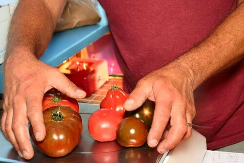Tomates aux Primeurs Cyclades de Gassin - https://gassin.eu