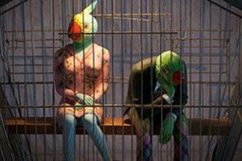 La conférence des oiseaux 2