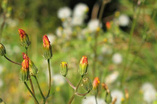 """Visite thématique """"Les plantes sauvages comestibles"""""""