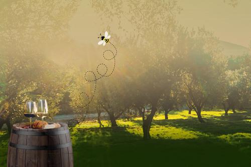 Vivez Provence 1