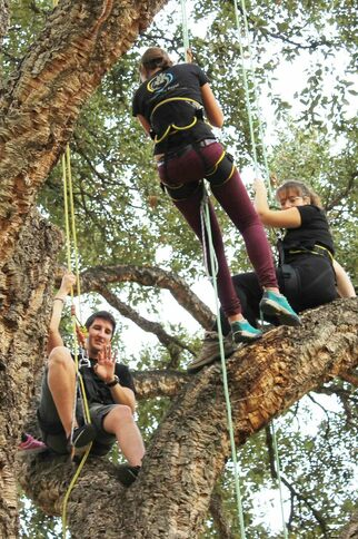 """Activité-familles """"Grimpez dans les arbres"""""""