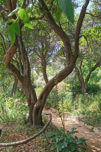 Jardin d'Afrique du Sud