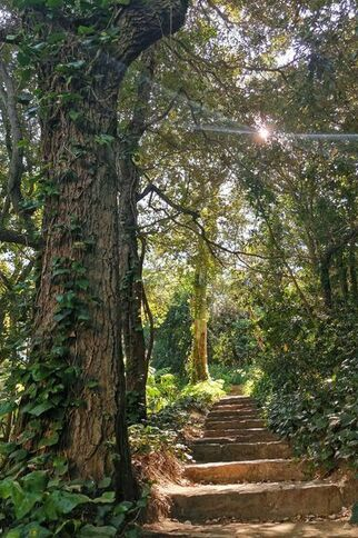 Jardin de Nouvelle Zélande