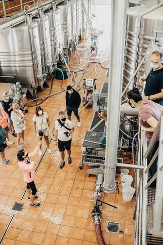 Grappe dans les Vignes de La Rouillère à Gassin - https://gassin.eu