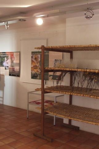 L'élevage de vers à soie