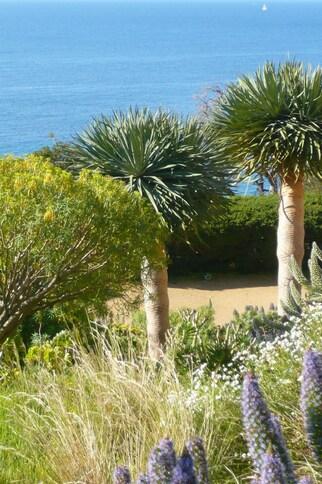 Jardin du Chili d'altitude