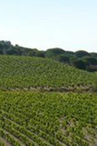 Domaine La Tourraque 1