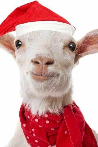 Ferme de Noël