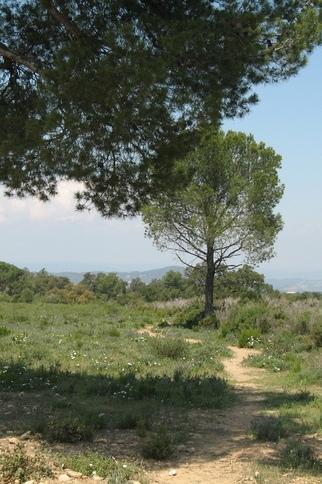 Plaine des Maures