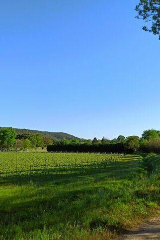 Vignes du Domaine du Bourrian sur le Sentier de la Mer à Gassin https://gassin.eu