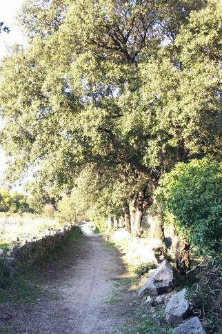 Sentier des Gorgues