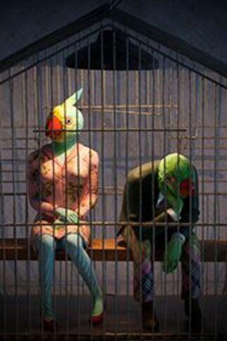 La conférence des oiseaux 3