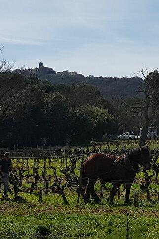 Travail du sol au cheval au château Barbeyrolles